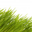 Spring green grass background. — Stock Photo
