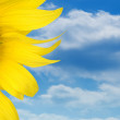 Stock Photo: Sunflower over blue sky