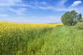 Agriculture summer nature landscape — Stock Photo