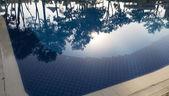 Reflet des arbres sur une eau de piscine — Photo