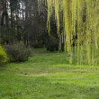 Spring green forest and grass — Stock Photo