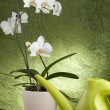Beautiful white orchid — Stock Photo #2402057