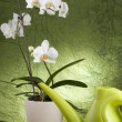 Stock Photo: Beautiful white orchid