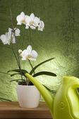 Beautiful white orchid — Stock Photo