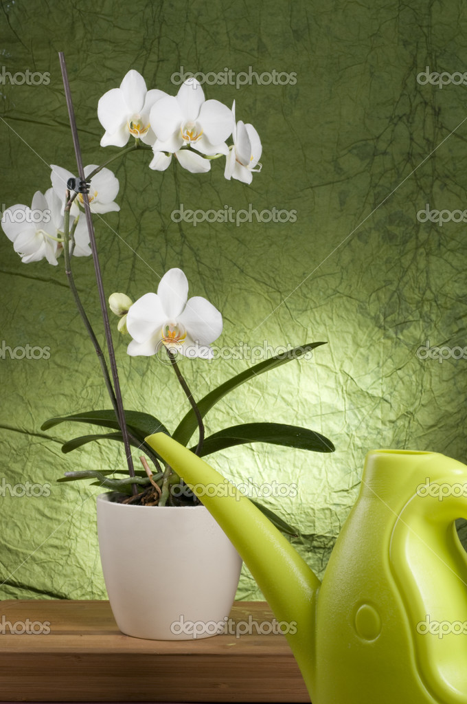 Beautiful white orchid in a pot with watering can over green textured background — Stock Photo #2402057