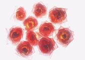 Bouquet of flower arrangement — Stock Photo