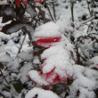 Bush in snow — Stock Photo #1797986