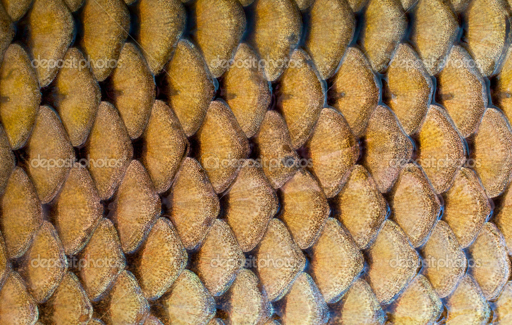 Fish scales texture — Stockfoto #1557479