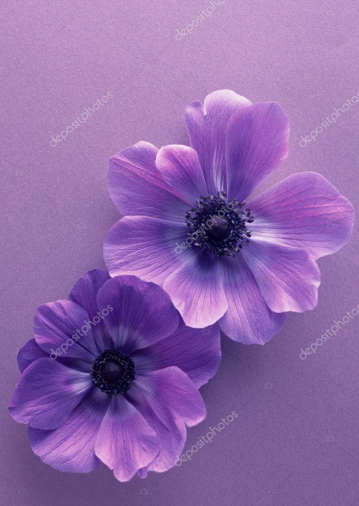 Вдохновение цветом картинки 6