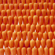 Carrot background — Stock Photo