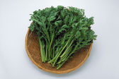 Coriander or Cilantro in basket — Stock Photo