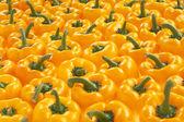Yellow paprika background — Stock Photo