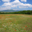 Flourishing mountain meadow — Stock Photo #1495763
