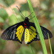 Tropic butterfly — Stock Photo