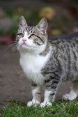 Yong cat — Stock Photo