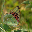 Day butterfly among vegetation — Stock Photo