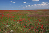 Spring steppe — Stock Photo
