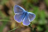 Blue day butterfly — Stock Photo