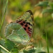 Day butterfly among vegetation — Stock Photo #1537248
