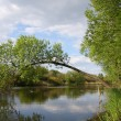 Tree over river — Stock Photo