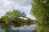 Árvore sobre o rio — Fotografia Stock