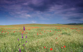 Flourishing steppe — Stock Photo