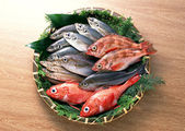 Fresh and healthy fish seafood — Stock Photo