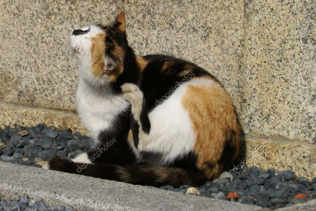 A cat scratching itself — Stock Photo #1501215