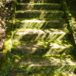 Mossy Stairs - Stock Photo