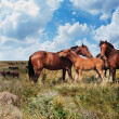 Horses in steppe — Stock Photo #1514100