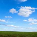 moln över det gröna fältet — Stockfoto