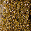 Stock Photo: Bees sealed honeycomb