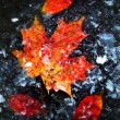 图库照片: Autumn leaves in ice
