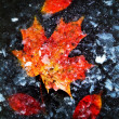 Foto de Stock  : Autumn leaves in ice