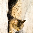Outdoor cat - Photo