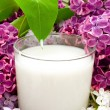 Milk and lilac - Stock Photo