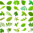 Leaves set — Stock Photo