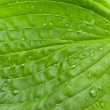 Leaf — Stock Photo #1499068
