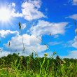 Grass and sky — Stockfoto