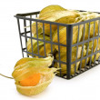 Ground-cherry ib basket — Stock Photo