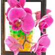 Flowers in the frame - Stock Photo