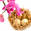 Stock Photo: Bird nest and orchid
