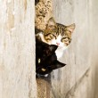 Two outdoor cat — Stock Photo #1499812