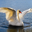 Royalty-Free Stock Photo: Swan