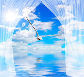 Seagull water and sun through curtain — Stock Photo
