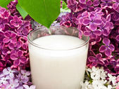 Lilac flower and milk — Stock Photo
