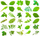 Leaves set — Stock Photo