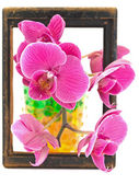 Flowers in the frame — Stock Photo