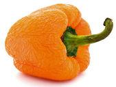 Old wrinkled orange paprika — Stock Photo