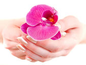 Orchid in woman hands — Stock Photo